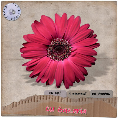 Pink Flower Pasko_gazania_preview